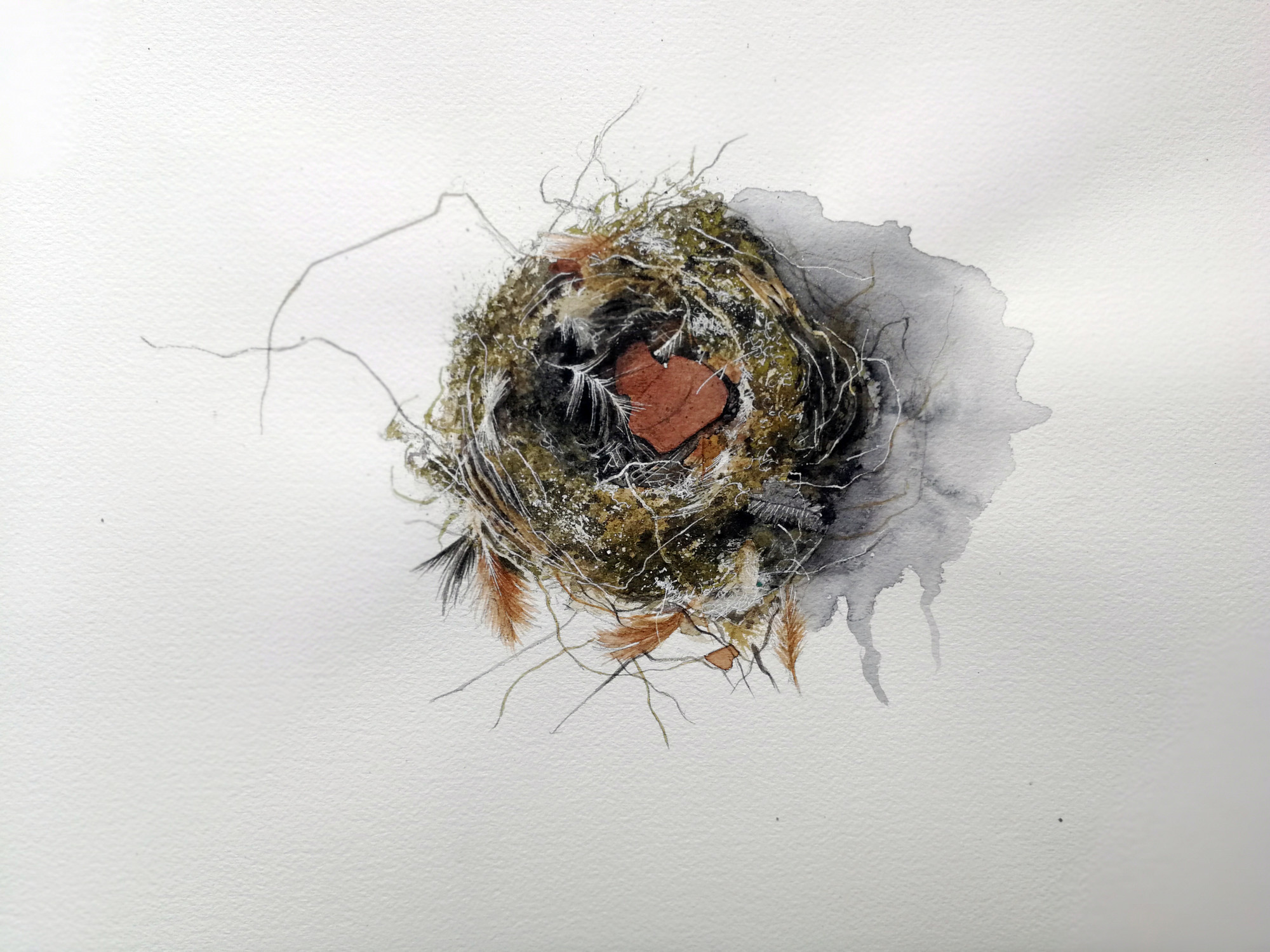 Nest with leaf and feathers